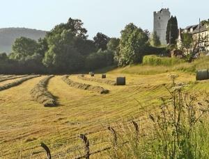 defynnog hay cropped © Julia Blazer